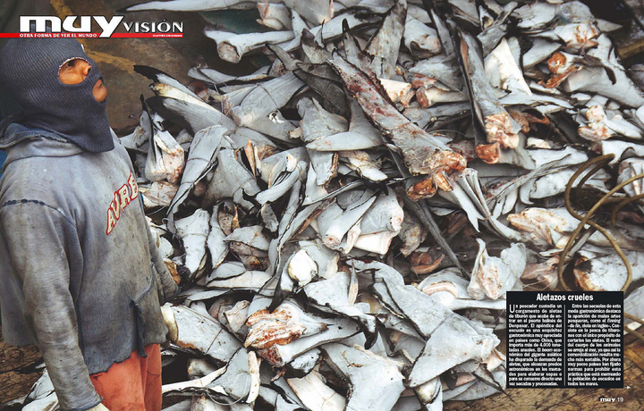 吃垮海洋生態 台灣獵捕鯊第4國