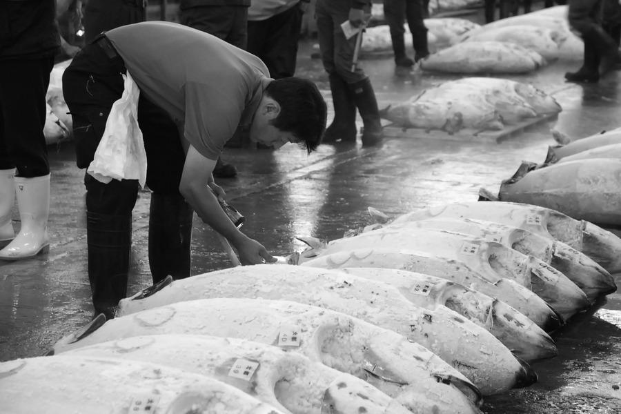 並非所有的海水魚都受到重金屬污染,即便同為鮪魚其含汞量也會因種類、捕撈海域、漁具漁法、生產地區等不同而有很大的差異,不能以偏概全。(photo by r.g+ on Flickr - used under Creative Commons licence)