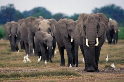 06-13-cites-elephant