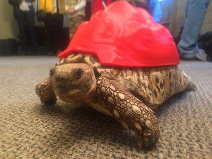 3d_turtle