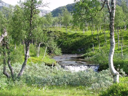 1024px-boreal-forest-with-river-arctic-norway