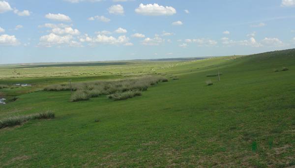美國最新研究指出,一些古老的草原生物群落擁有豐富的生物多樣性和生態系統服務,然而在人類活動及看似對環境友善的植樹活動下,遭受大規模威脅與破壞。(photo by wikipedia)