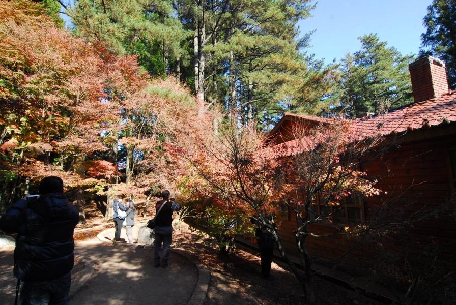 福壽山入口右邊的小屋被群楓圍繞,相當壯觀。(photoby 鄭國強/台灣醒報)