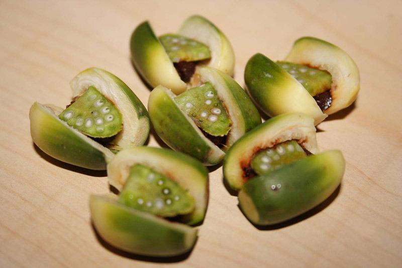 檳榔不僅會導致口腔癌,更可能會造成食道癌及肝癌。(photo by Wikipedia)