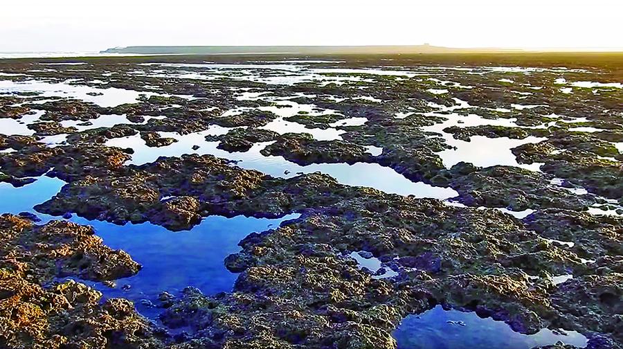 洪正中認為,應在藻礁的破壞範圍儘量縮小之下,讓觀塘天然氣接收站得以完成。(photo by 影片截圖)