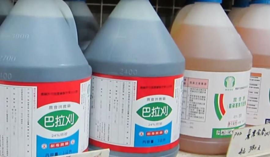 禁用巴拉刈爭議,陳吉仲澄清,巴拉刈為高風險退場農藥,且已有77國禁用。(photo by 網路截圖)