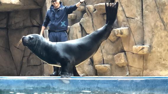 虐待動物營利? Xpark水族館展演惹議