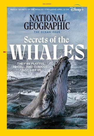 不只人類 鯨魚也有文化差異!(國家地理雜誌 National Geographic)