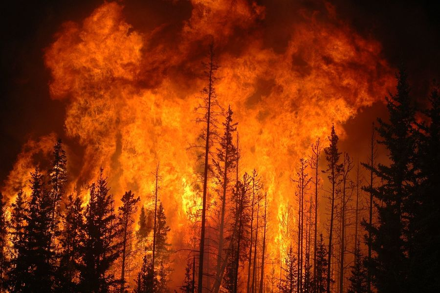 1600px-fire-forest